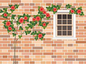 綺麗な壁とばら